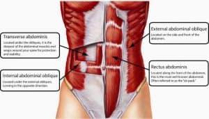שרירים בבטן - חדר כושר הולמס פלייס